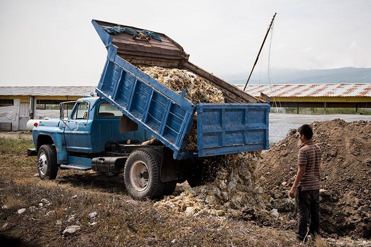 Camión incencio granja de pollos