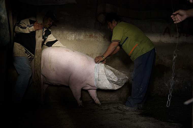 matanza-cerdo-mexico