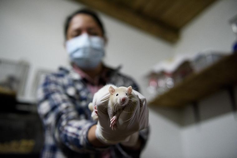 ratón zoológico comida reptiles