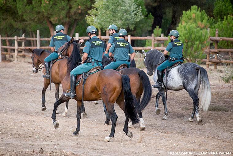 guardia-civil-caballos-matanza-toro-de-la-vega-tordesillas