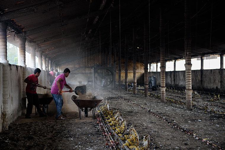 limpiando-incendio-granja-pollos