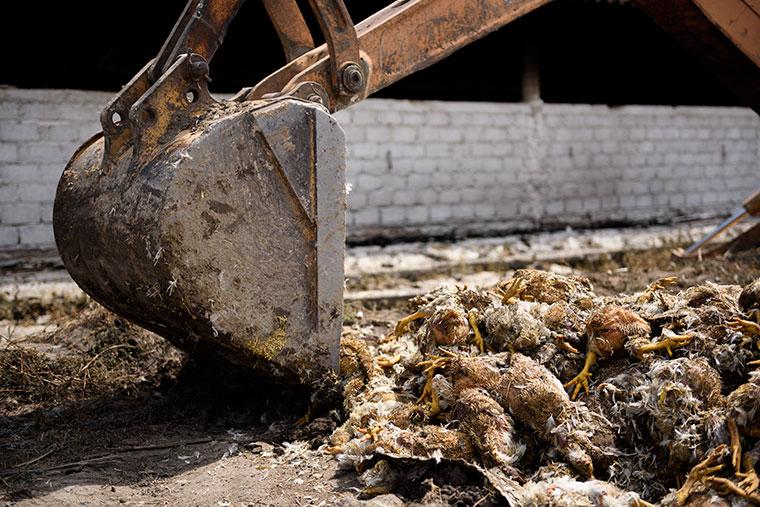 pala-excavadora-incendio-granja-pollos