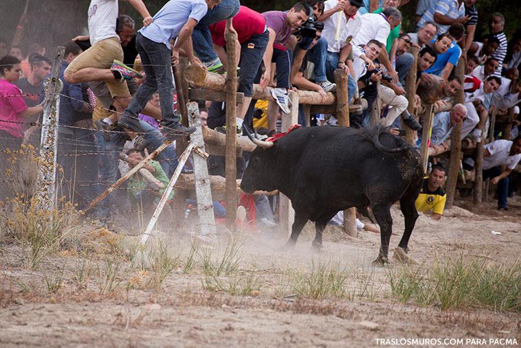 tordesillas-matanza-toro-de-la-vega